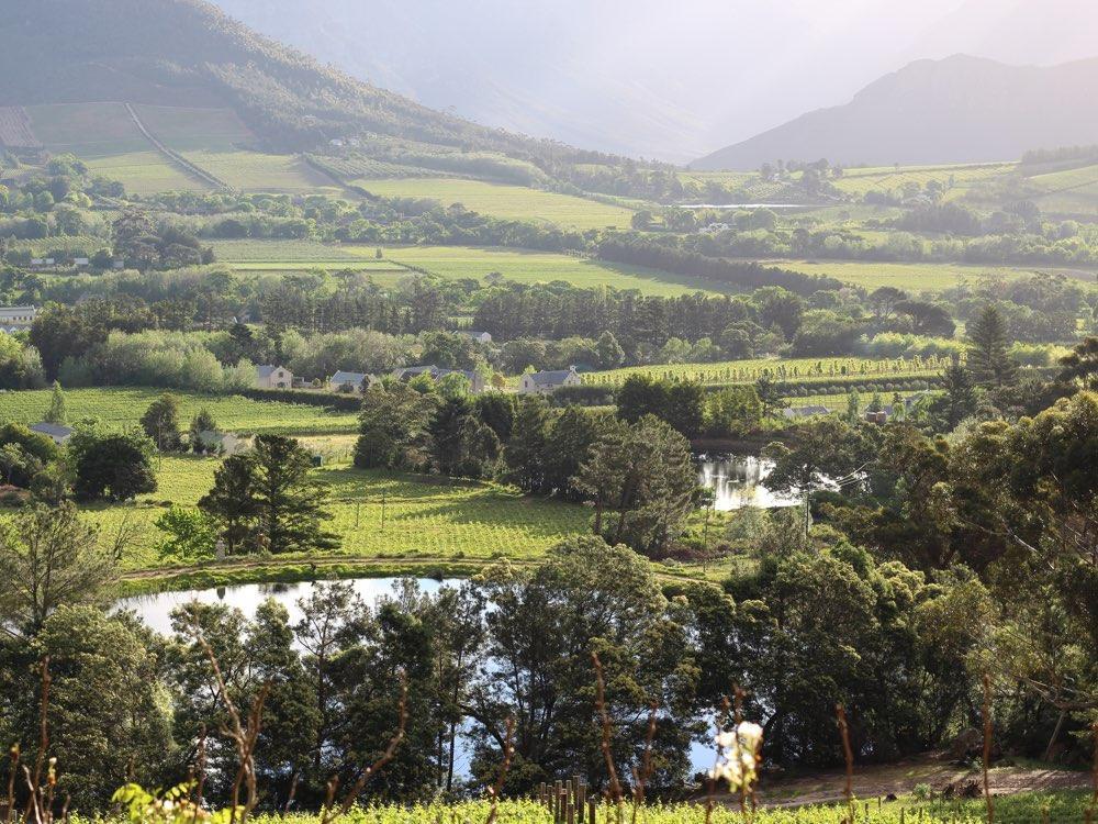 Südafrikas Weinwirtschaft im Wandel