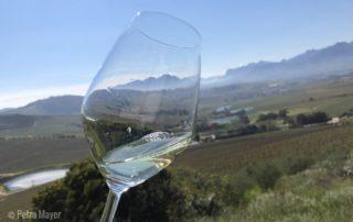 Ein Blumenstrauß an Aromen - Sauvignon Blanc